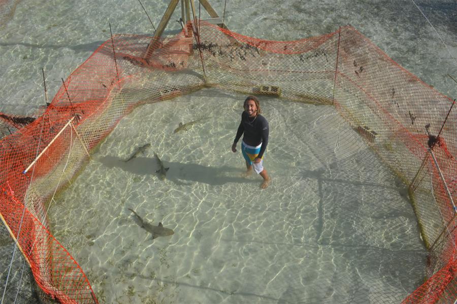 Working at Bimini sharklab, studying the social behavior of lemon sharks - photo credits Bryan Keller
